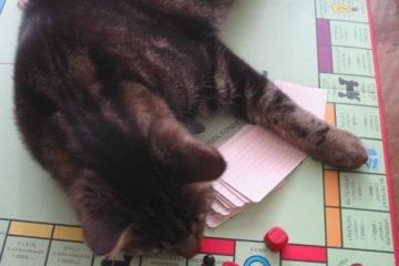 kat op monopoly bord